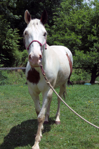 Rescued Horse