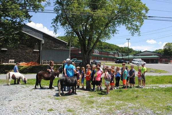 Avery County 4H