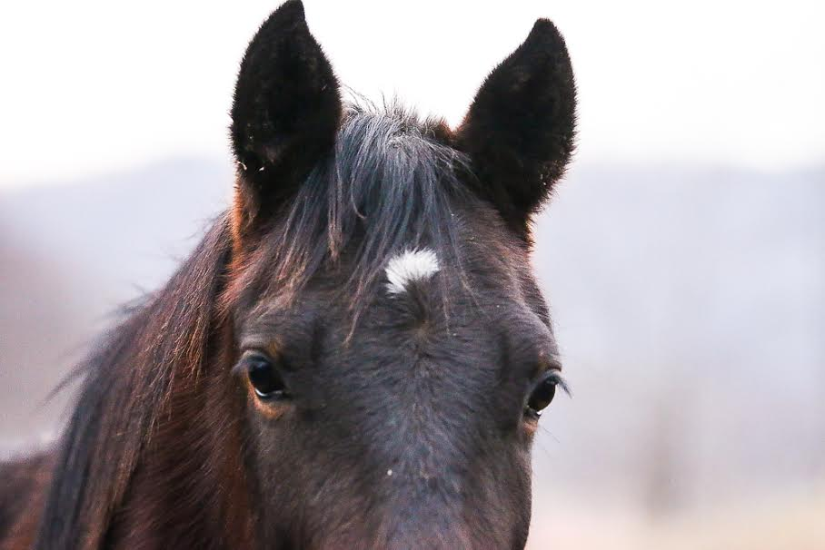 Rescured Horse